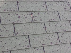 roof-hail-damage-denver
